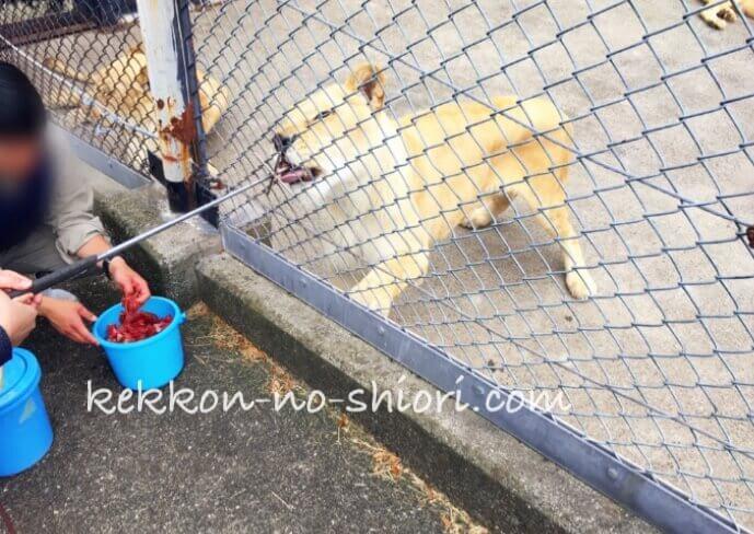 姫路セントラルパーク ホワイトライオン 餌やり
