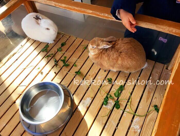 アドベンチャーワールド ウサギ