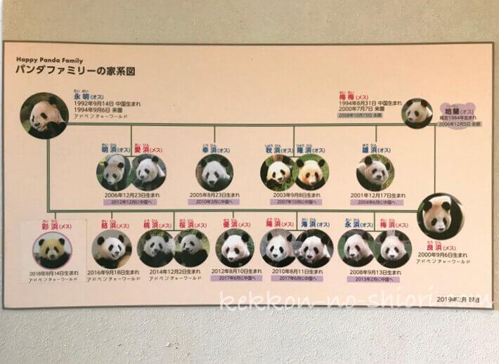 アドベンチャーワールド パンダファミリーの家系図